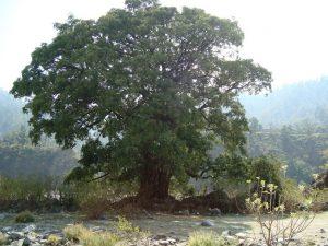 корените са духа
